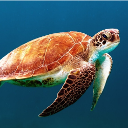 World Oceans Day Turtle